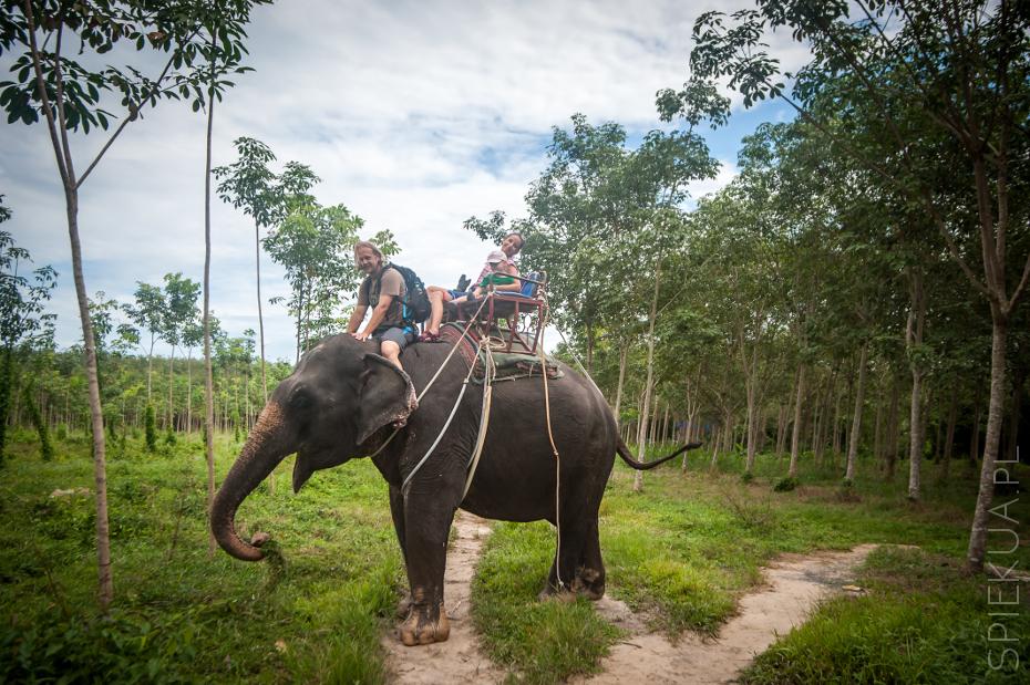 przejazdzka na sloniu