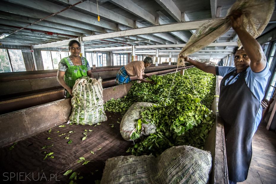 fabryka herbaty
