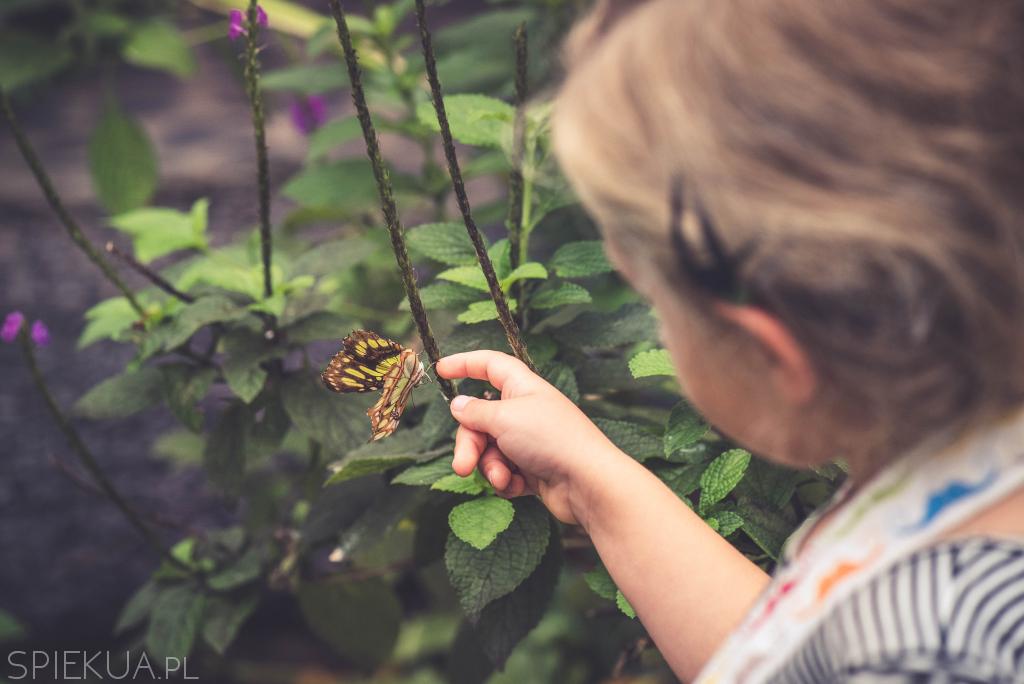 anton valle butterfly heaven