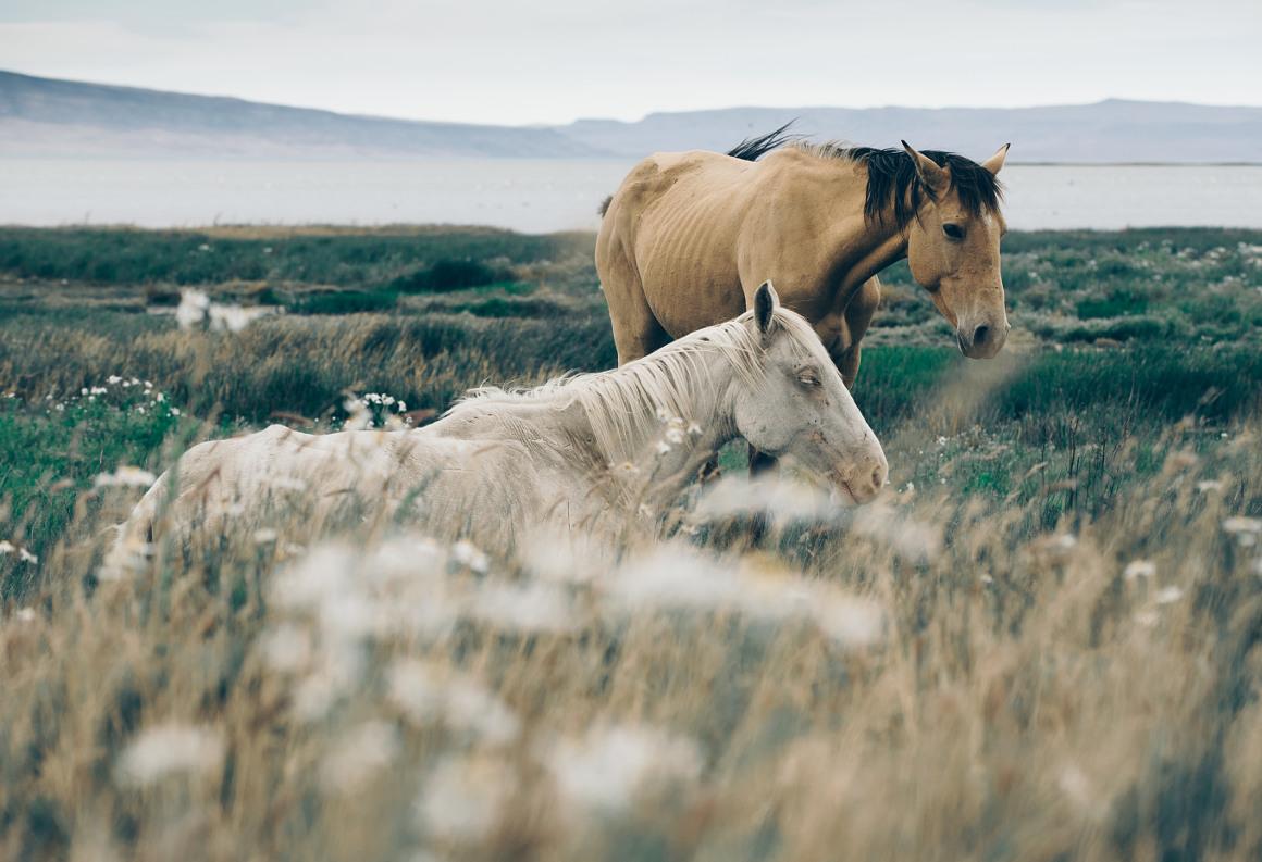 konie argentyna
