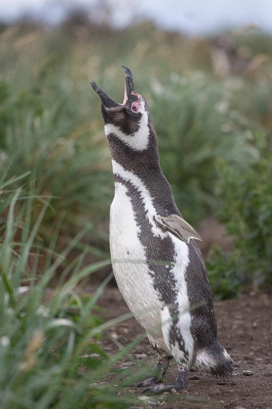 wyprawa na pingwiny Patagonia