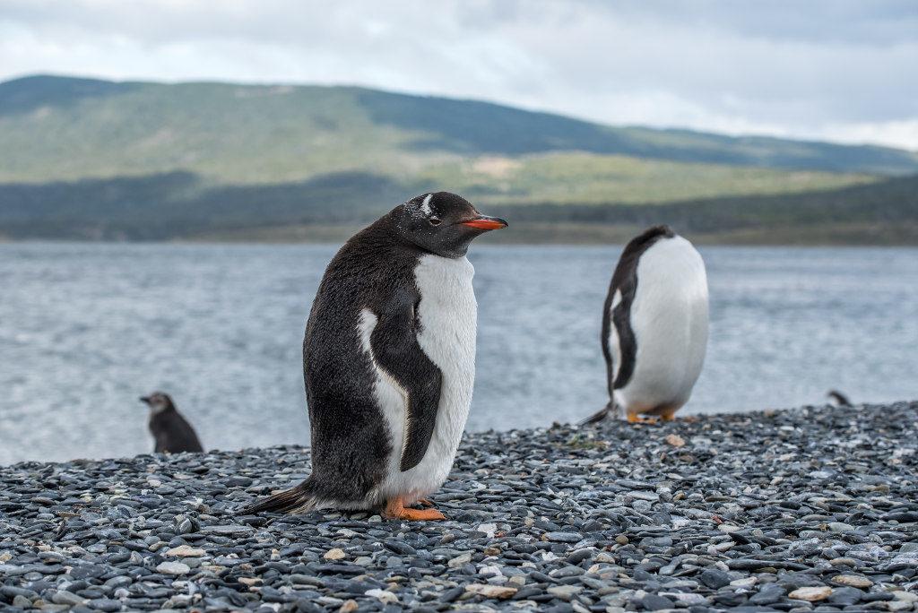 wyprawa na pingwiny