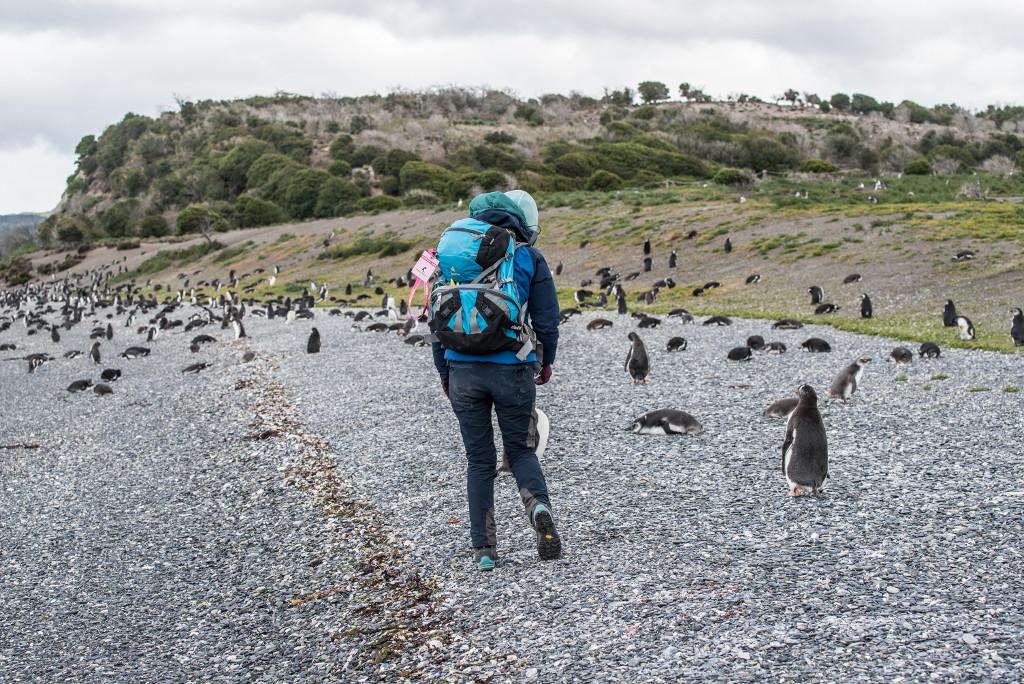 pingwiny magellańskie wyprawa