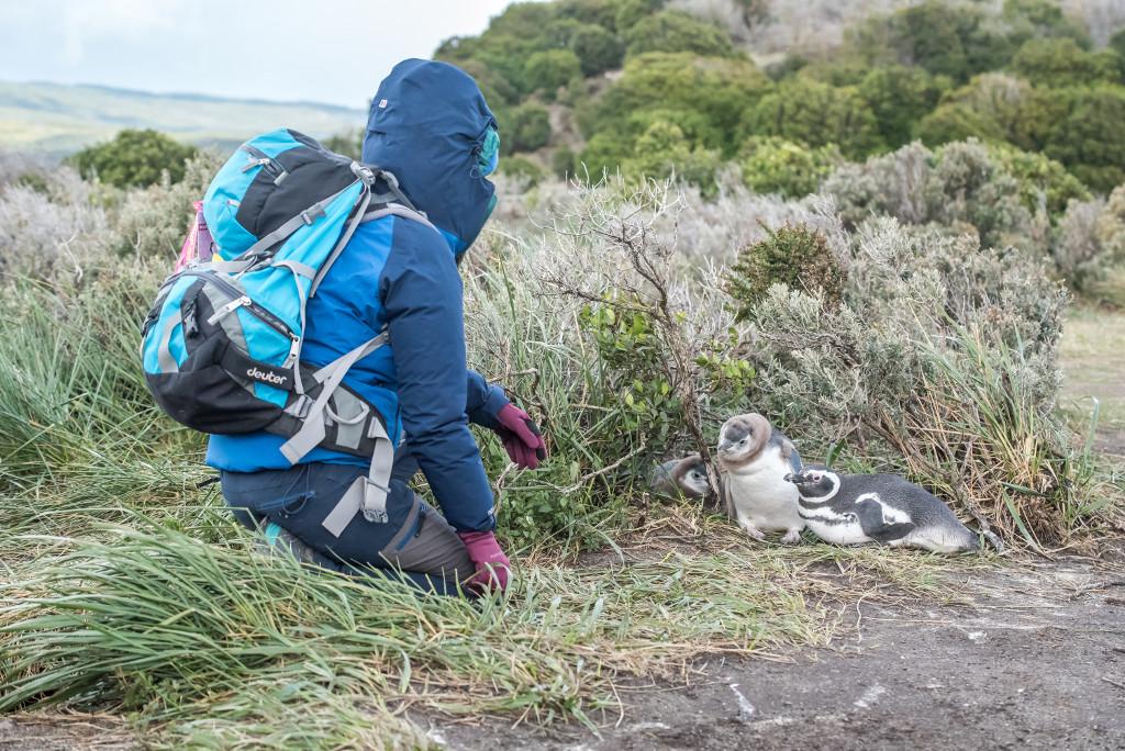 spotkanie z pingwinami