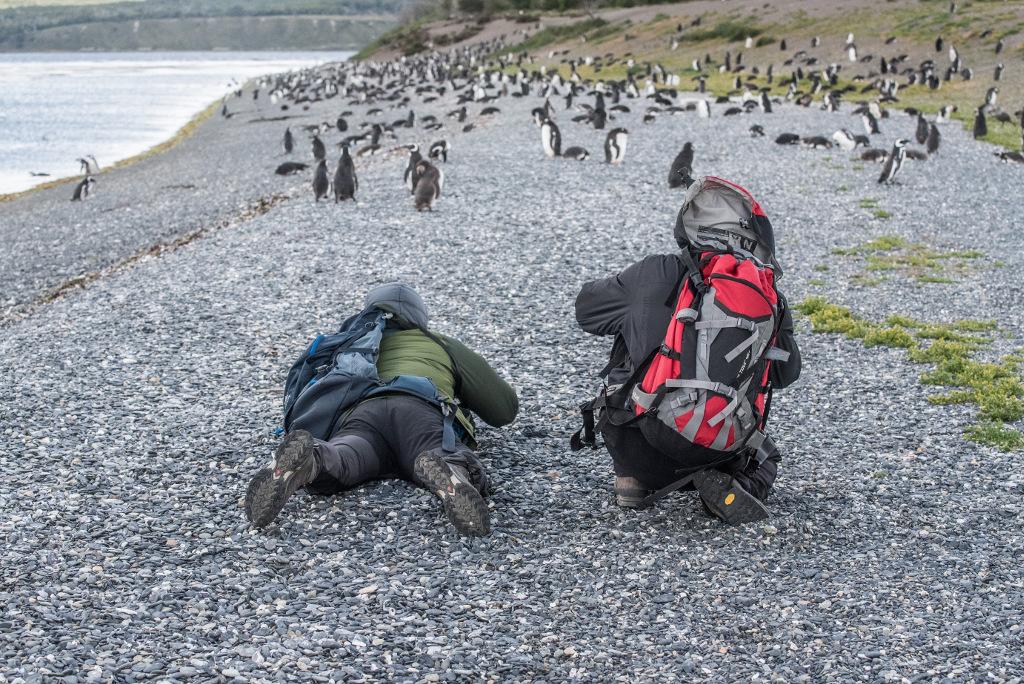 fotografowanie pingwinów